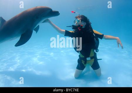 young scubadiver and Bottlenose Dolphin, (Tursiops truncatus) in delphinarium - Stock Photo
