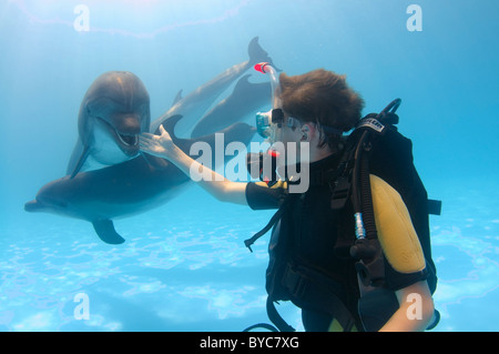 young scubadiver and two Bottlenose Dolphin, (Tursiops truncatus)  in delphinarium - Stock Photo