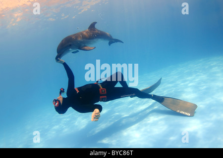 Freediver and Bottlenose Dolphin, (Tursiops truncatus) - Stock Photo