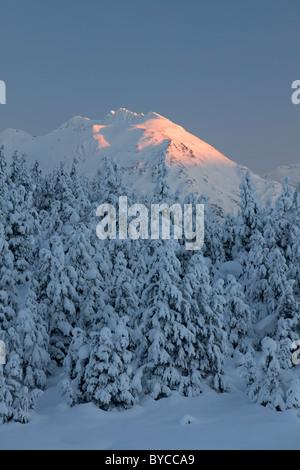 Snow trees in Turnagain Pass, Chugach National Forest, Alaska. - Stock Photo