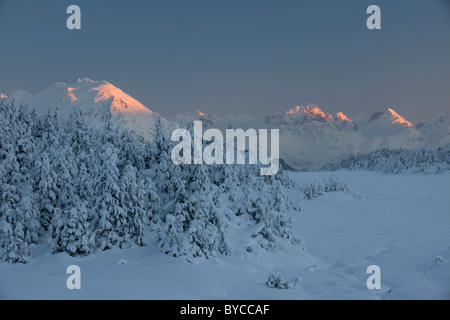 Snow trees in Turnagain Pass, Chugach National Forest, Alaska. - Stock Photo