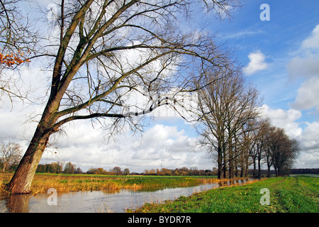 River Alster and meadow landscape with poplar trees in autumn, nature reserve Oberalsterniederung at Nahe, Schleswig - Stock Photo