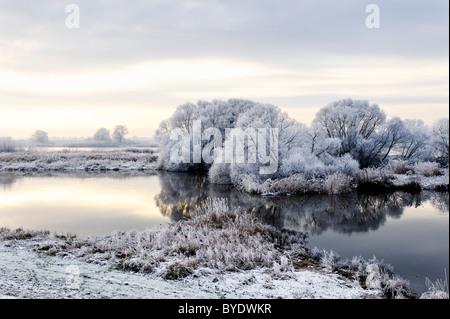 Frost-covered Elbe landscape in Kirchwerder, Vier- und Marschlande area, Hamburg, Germany, Europe - Stock Photo