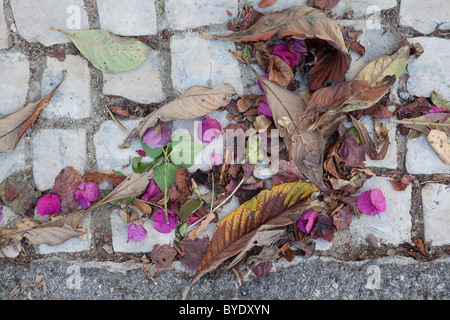 Dried flowers and leaves - Stock Photo
