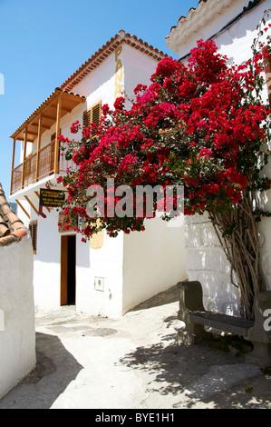 bougainvillea fataga gran canaria spain stock photo royalty free image 15121208 alamy. Black Bedroom Furniture Sets. Home Design Ideas