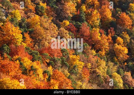 Autumnal mixed forest in the valley near Duernstein, Wachau valley, Waldviertel region, Lower Austria, Europe - Stock Photo