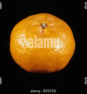 Whole mandarin fruit variety Fortune - Stock Photo