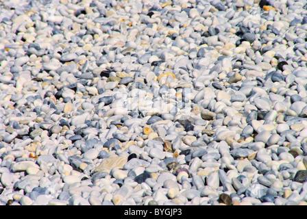 Kieselstrand Toskana - pebble beach Tuscany 02 - Stock Photo