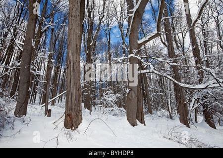 Snowy woodland, Jockey Hollow, Morristown National Historical Park, New Jersey - Stock Photo