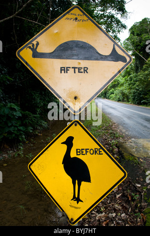 A humorous sign warning drivers of Cassowary birds on the road in Daintree National Park Queensland Australia - Stock Photo