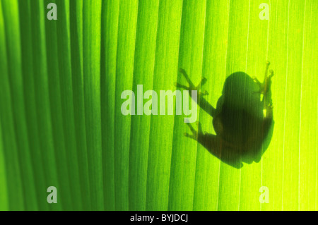 Shadow of Toad on Leaf - Stock Photo