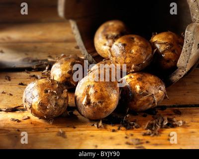 Fresh dug new potatoes - Stock Photo