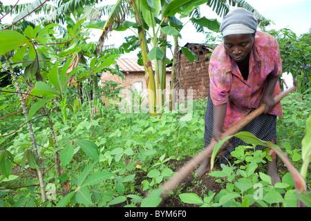 A woman farmer works on her small farm in rural Masaka, Uganda, East Africa. - Stock Photo