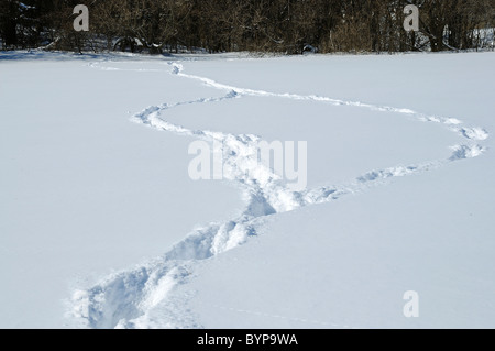 Fresh deer tracks in deep snow which show the animal had to jump through snow it was so deep. - Stock Photo