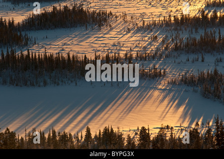 Baeume mit Schattenwurf, Sjaunja Naturreservat, Welterbe Laponia, Lappland, Schweden - Stock Photo