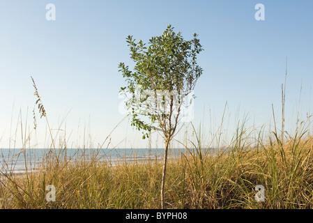 Solitary tree growing near water's edge - Stock Photo