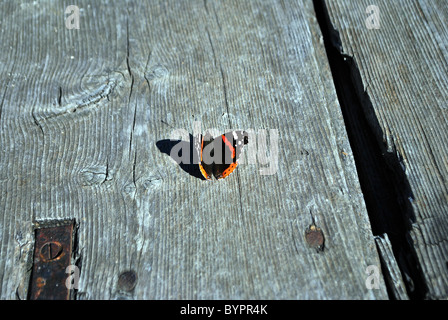 colorful butterfly on wood - Stock Photo