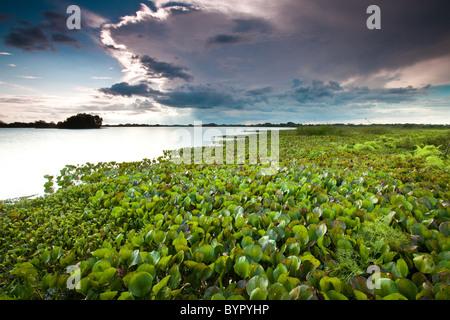 At the lakeside of Refugio de vida Silvestre Cienaga de las Macanas Nature Reserve, in Herrera province, Republic - Stock Photo