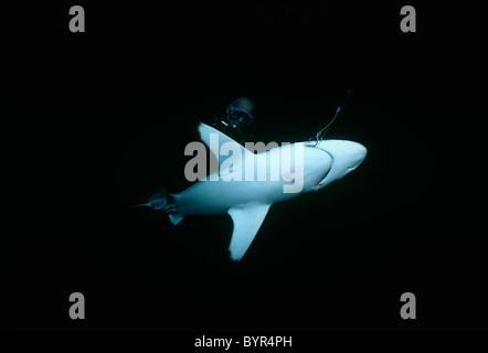 Diver observes Blacktip Shark (Carcharhinus limbatus) hooked on long line. Cocos Island, Costa Rica - Pacific Ocean - Stock Photo