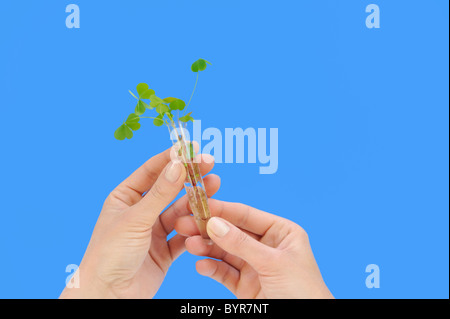 Hand holding tube with fresh  plant - Stock Photo