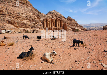 Goats sitting in front of the Monastery, sculpted out of the rock, at Petra, Jordan - Stock Photo