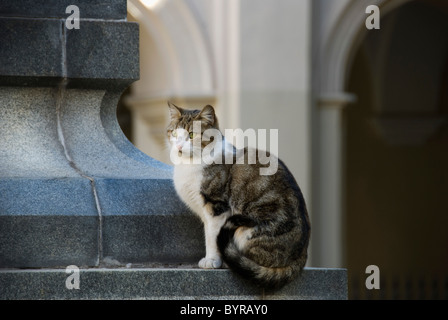 cat sitting on a monument; cordoba, argentina - Stock Photo