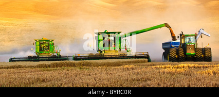 """Two John Deere combines in tandem harvest wheat in late afternoon light while one unloads into a grain cart """"on - Stock Photo"""