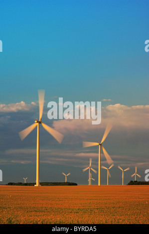 Agriculture - Wind turbines operate in a mature wheat field at sunset / near Somerset, Manitoba, Canada. - Stock Photo