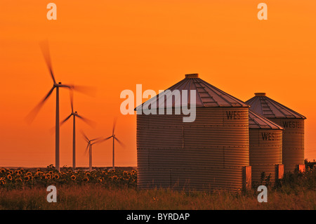Three grain bins stand on the edge of a sunflower field at sunset with four wind turbines in the background / Manitoba, - Stock Photo