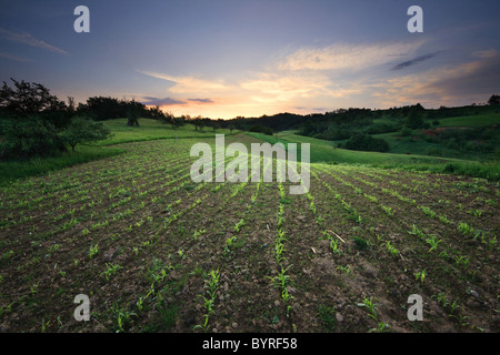 Spring crops over rolling hills at sunrise - Romanian countryside - Stock Photo