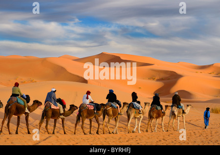 Tuareg Berber man leading a group of tourists on camels through the Erg Chebbi desert with gold sand dunes in Morocco - Stock Photo
