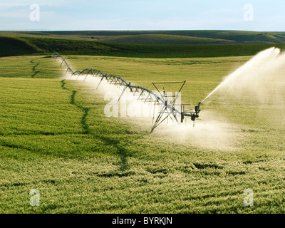 Agriculture - Operating center pivot irrigation system on a green grain field / Idaho, USA. - Stock Photo