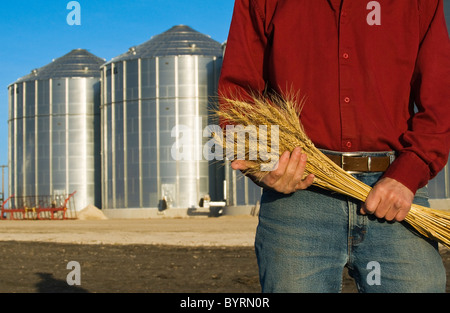 Closeup of a farmer holding stalks of mature wheat with grain storage bins in the background / near Lorette, Manitoba, - Stock Photo