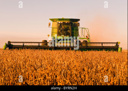 Agriculture - A John Deere combine harvests mature soybeans in late afternoon light / near Oakbank, Manitoba, Canada. - Stock Photo