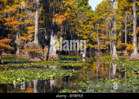 Bald cypress trees, Cypress Swamp, Caddo Lake, Texas and Louisiana, USA - Stock Photo