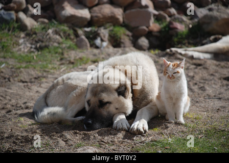 dog and cat looking at each other stock photo royalty free image 54377246 alamy. Black Bedroom Furniture Sets. Home Design Ideas