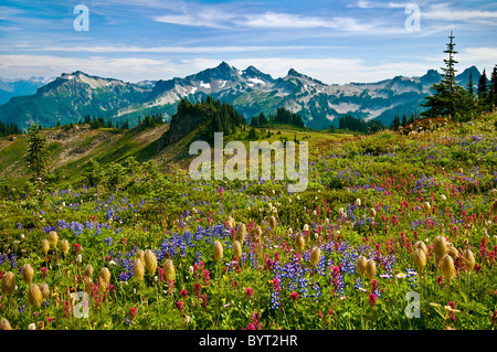 Wildflowers in meadow and view to Tatoosh Range from Skyline Trail in Paradise area; Mount Rainier National Park, - Stock Photo
