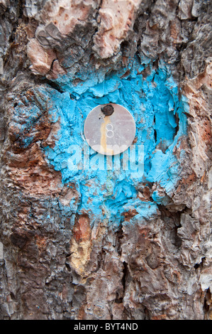 The number 8 stamped on a metal disk nailed to a tree trunk. - Stock Photo