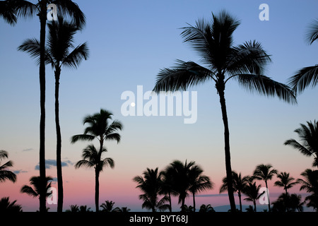 Full moon over palm trees with sunrise in Maui, Hawaii. - Stock Photo