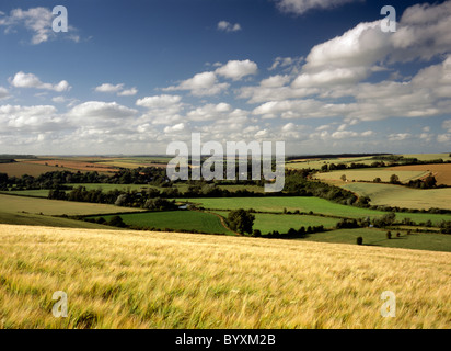 A field of barley near Stapleford in the Wylye Valley, Wiltshire, England. - Stock Photo