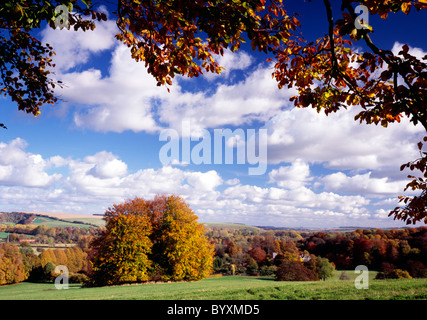 Beech trees at Boyton in the Wylye Valley, Wiltshire, England. - Stock Photo