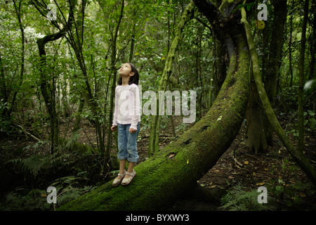 Girl stands on tree trunk and looks up into forest canopy, New Zealand. - Stock Photo