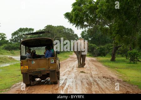 An Asian elephant walking in front of a safari jeep Yala National Park Sri Lanka - Stock Photo
