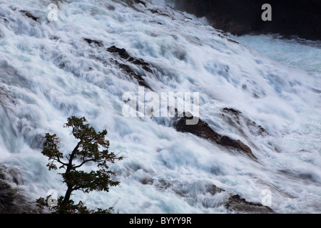 Roaring rapids of Bow Falls, Bow River, Banff National Park, Alberta, Canada - Stock Photo