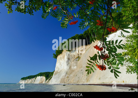 The famous chalk-cliffs at Ruegen Island, Baltic Sea Germany, Europe - Stock Photo