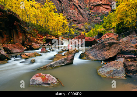 The Virgin River flows past cottonwoods in Zion Canyon, Zion National Park, Utah, USA. - Stock Photo