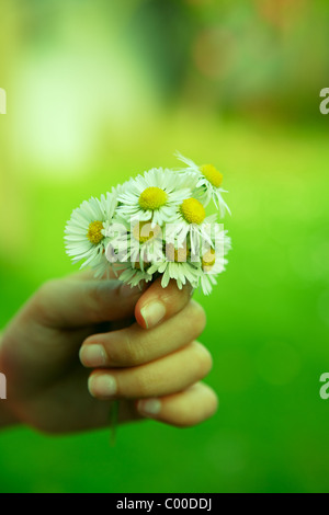 Girl holds bunch of daisies - Stock Photo