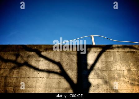 TREE SHADOW ON ROUGH WALL - Stock Photo