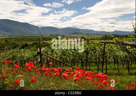 Missian near Eppan an der Weinstrasse, wine route, Ueberetsch, Bozen Unterland, Oltradige-Bassa Atesina district, - Stock Photo