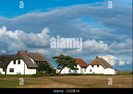 Houses surrounded by meadows in Neuendorf on Hiddensee island, Mecklenburg-Western Pomerania, Germany, Europe - Stock Photo